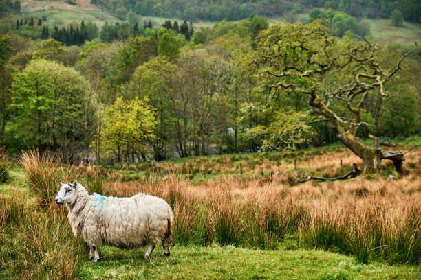 Loch Voll